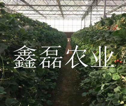 花卉、育苗基地